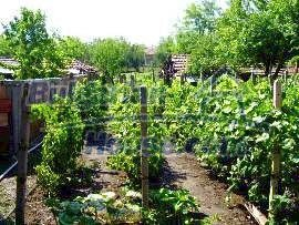 2147:9 - A fantastic rural bulgarian property for sale