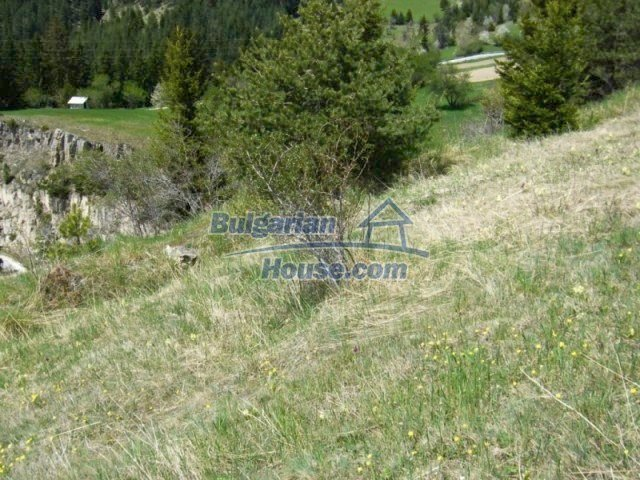 7113:5 - Buy Bulgarian large plot of land near Pamporovo