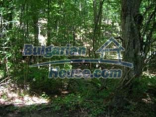 8994:1 - Forest for sale near Elena