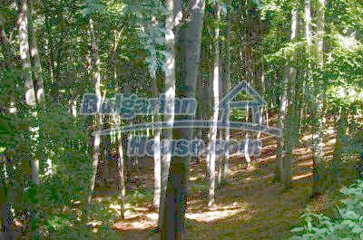 10544:1 - FOREST for sale, near a bulgarian house in Veliko Tarnovo region