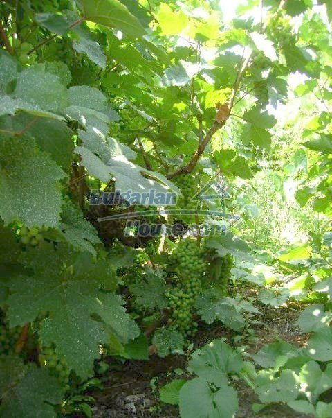 10812:11 - Well maintained house with a vineyard near Stara Zagora