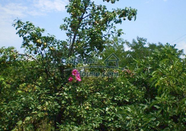 12039:10 - Charming holiday home with sunny garden near Plovdiv