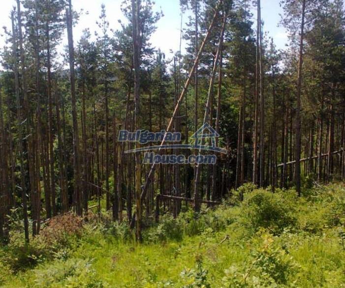 Forest land for sale in Voynezha, Veliko Tarnovo region