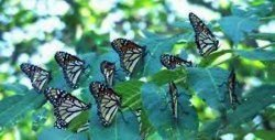 ''Butterfly Museum'' About to be Open in Rhodope Mountains