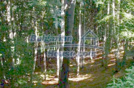 Forest for sale near Elena - 10544