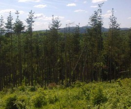 Forest for sale near Veliko Tarnovo - 12292
